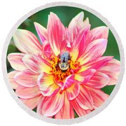 Bee In The Center Round Beach Towel