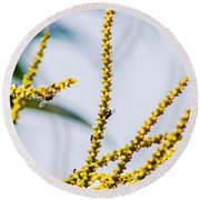 Bee On A Branch I Round Beach Towel