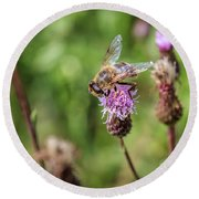 Bee On A Thistle Flower Round Beach Towel