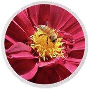 Bee On Beautiful Dahlia Round Beach Towel