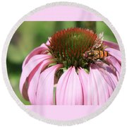 Bee On Echinacea Round Beach Towel
