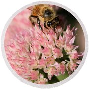 Bee On Flower 4 Round Beach Towel