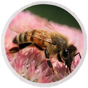 Bee On Flower 6 Round Beach Towel