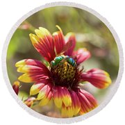 Bee On Gaillardia Round Beach Towel