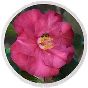 Bee On Pink Camellia Round Beach Towel