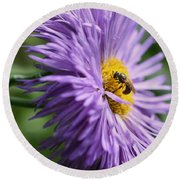 Bee On Purple Daisy Round Beach Towel