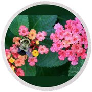 Bee On Rainy Flowers Round Beach Towel