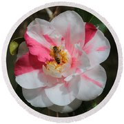 Bee On White And Pink Camellia Round Beach Towel