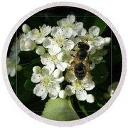 Bee On White Flowers 2 Round Beach Towel