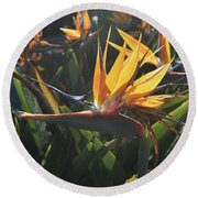 Bee Resting On The Petals Of A Bird Of Paradise  Round Beach Towel