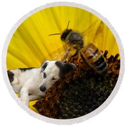 Bee With Dog Round Beach Towel