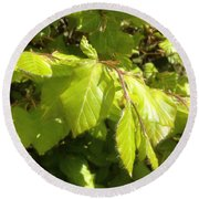 Beech Hedge In Spring Round Beach Towel