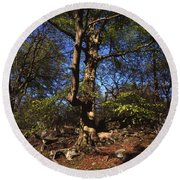 Beech Trees Coming Into Leaf  In Spring Padley Wood Padley Gorge Grindleford Derbyshire England Round Beach Towel
