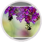 Bees On Butterfly Bush Framed Round Beach Towel