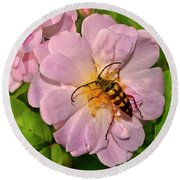 Beetle In A Rose 003 Round Beach Towel