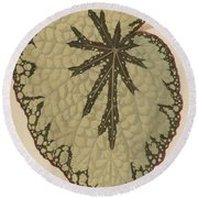 Begonia Marshallii  Round Beach Towel
