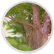 Being Old Trees Round Beach Towel