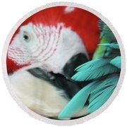belle Ara Macao oiseaux tropicaux de Maui  Round Beach Towel