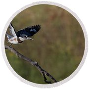Belted Kingfisher Liftoff Round Beach Towel