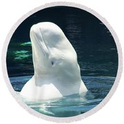 Beluga Whale Round Beach Towel