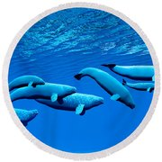 Beluga Whale Pod Round Beach Towel