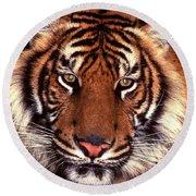 Bengal Tiger - 2 Round Beach Towel