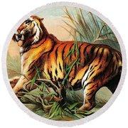 Bengal Tiger, Endangered Species Round Beach Towel