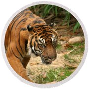 Bengal Tiger II Round Beach Towel