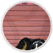 Bernese Mountain Dog Alertly Guarding Home. Round Beach Towel