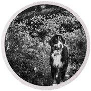 Bernese Mountain Dog Black And White Round Beach Towel