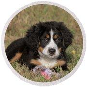 Bernese Mountain Dog Puppy Round Beach Towel