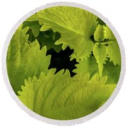 Between The Leaves Round Beach Towel