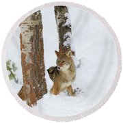 Between The Trees Round Beach Towel
