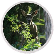 Beverly Hills Deer Round Beach Towel