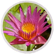 Beyond Beautiful Water Lily 3 Round Beach Towel
