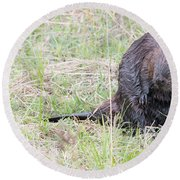 Big Beaver Round Beach Towel