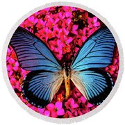 Big Blue Butterfly On Kalanchoe Flowers Round Beach Towel