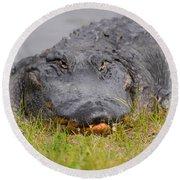 Big Boy Gator 2 Round Beach Towel