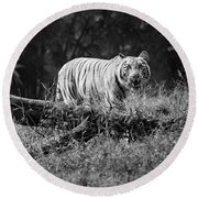 Big Cat In The Woods Round Beach Towel