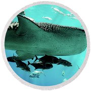 Big Fish Round Beach Towel