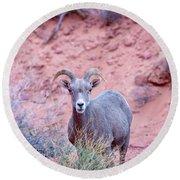 Big Horn Sheep Round Beach Towel