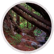 Big Sur Redwood Canyon Round Beach Towel