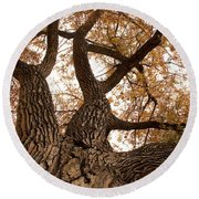 Big Tree Round Beach Towel
