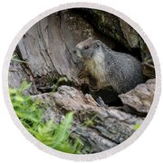 Big Tree Trail - Marmot - Sequoia National Park - California Round Beach Towel