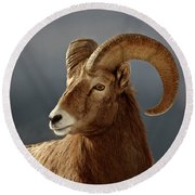 Bighorn Sheep In Winter Round Beach Towel