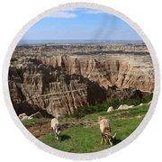 Bighorn Sheeps At Sage Creek Round Beach Towel