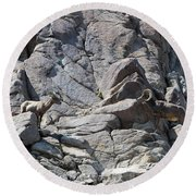 Bighorns Romantic Stare Round Beach Towel