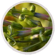 Billbergia Nutans Round Beach Towel