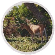Billy Goat Round Beach Towel