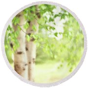 Birch In Spring Round Beach Towel